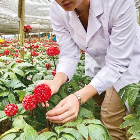 現地にて品質を確認し、栽培指導を行っております。