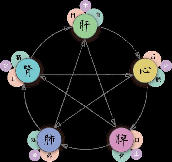 五臓六腑の関係図