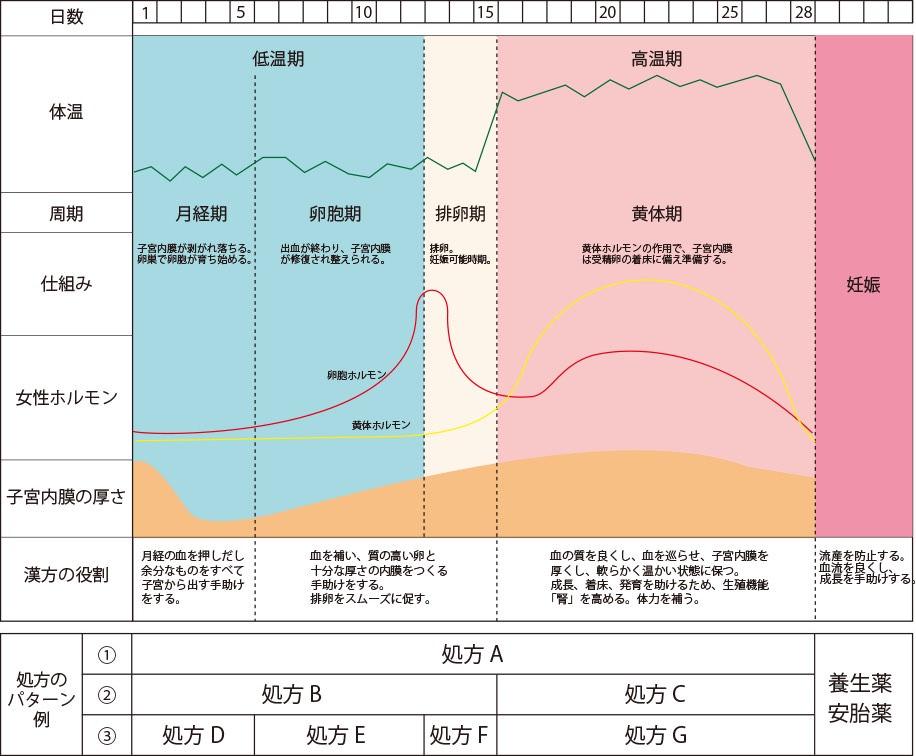 妊娠までの身体の周期と処方パターン例
