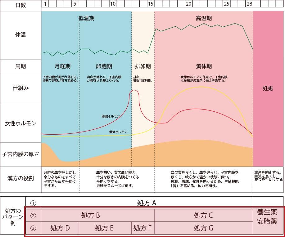 妊娠までの身体の周期と処方パターン例 3